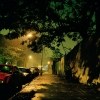 02_gowanus_wild_street_jung
