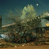 gowanus_wild_spring_tangle