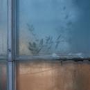"Amy Rindskopf (Winchester, MA) - ""Dreamed Botany #1"""